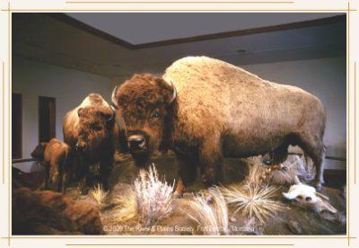 1887 - The Hornaday/Smithsonian Buffalo