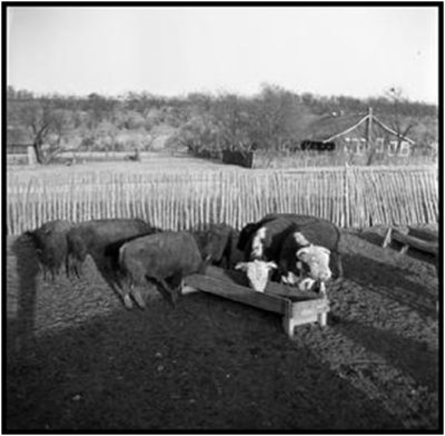 1949 Lambshead Ranch_Matthews by Wallace, Sally Brittingham