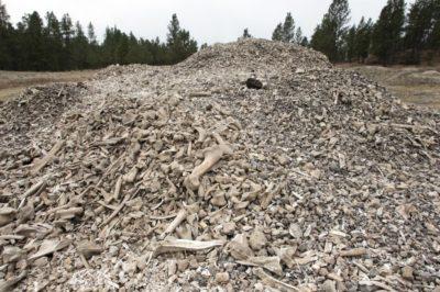 2000 year old bison bone dig site Crow Res.