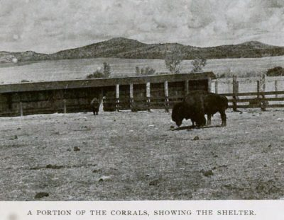 A Portion of the Corrals Showing Shelter