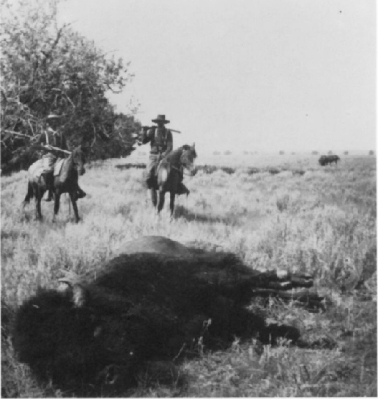 1882 Buffalo Hunting Mt