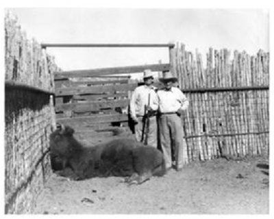 John Lane and Cap Yates standing near a dead buffalo in a corral.