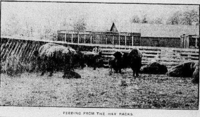 Feeding in the Hay Racks