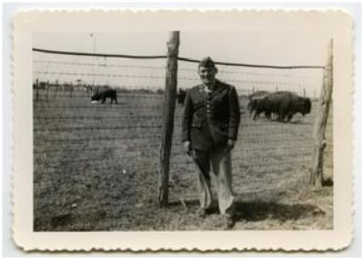 Photograph of a soldier in uniform in front of fenced in buffalo.