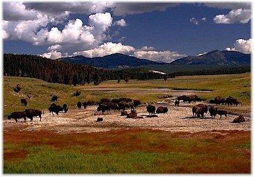 Restoring the bison_restoring the spirit pic 2