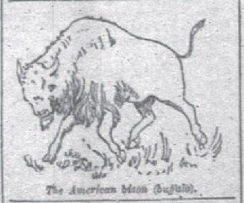 1890 Bison History American Bison