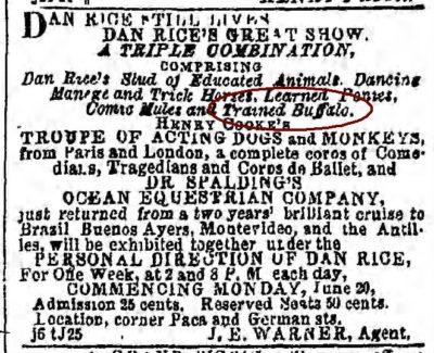 1861-1866 The Baltimore Sun Maryland June 11 1864 Trained Buffalo