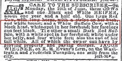 1861-1866 The Baltimore Sun Maryland June 21 1864 -found white buffalo cow & calf