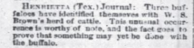 The Courier Journal Louisville KY Aug 8 1878 Bison Mixed With Cattle