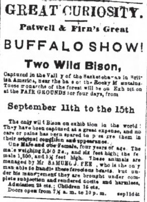 1866 two Wild Bison is a Show