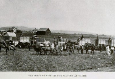 Bison crates for the wagons at Cache
