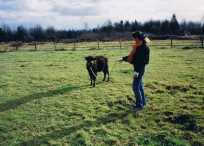 Contact Us ~My First Calf-Boo Boo