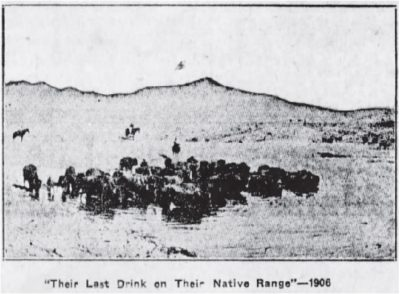 """""""Their Last Drink on Their Native range, Half Mile from the Shipping Corrals at Ravalli, Montana."""""""