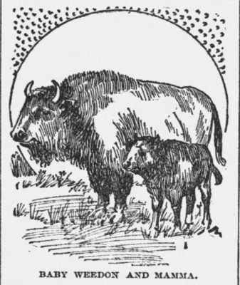 1891 Waterbury Evening Democrat Waterbury Conn. Baby Weedon