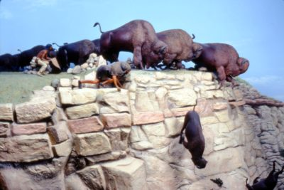Buffalo Jumps All About Bison