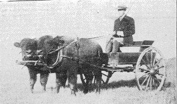 Ernest Harold Baynes driving calves
