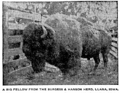 The Minneapolis Journal Mar 28 1903 Nucleus herd in Iowa from Flathead