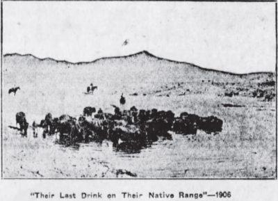 Their Last Drink The Winnipeg Trib Dec 25 1929