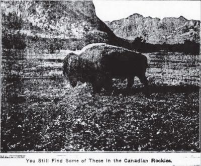 1918 Wainwright buffalo Park, Canada