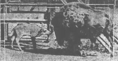 The Buffalo Commcial May 29 1922 Baby at zoo