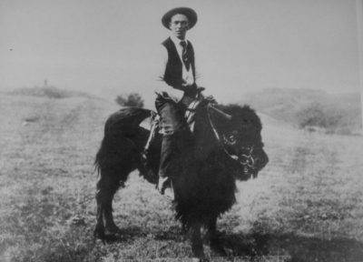 Hjalmer 'Yum' Nordvold broke Scotty Phillip buffalo to ride with saddle and bridle.