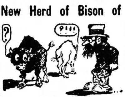 1913 Bison History