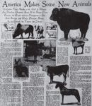 America Makes Some New Animals 1929