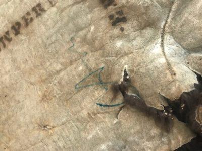 Green mark on back of hide