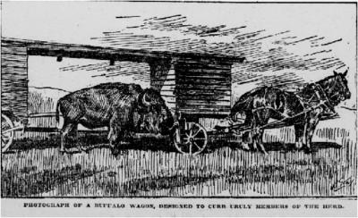 Buffalo Wagon