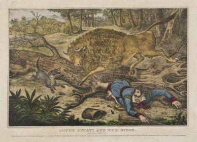 Bison North America lithograph . 1830-1860