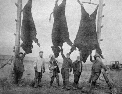 1926 Bison savages are rare today. Also these hunters from the State of Minnesota are in their table.