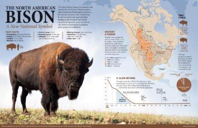Bison-Infographic Hiram Henriquez