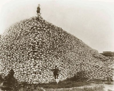 Mound of Bison Skulls