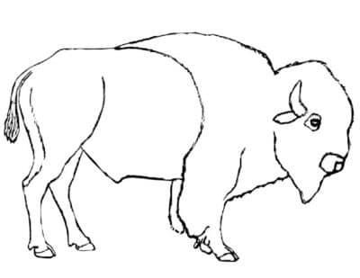 Bison bull coloring
