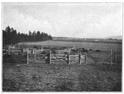 Registering the Conrad Herd in Kalispell Corral