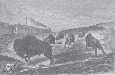 Railroad Buffalo Hunting