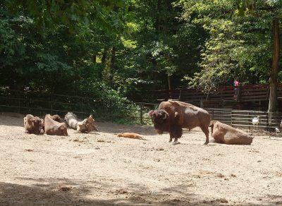 Hungary Nyíregyháza_Zoo